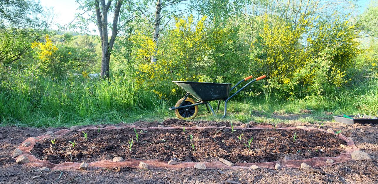 Vegetable bed with wheelbarrow